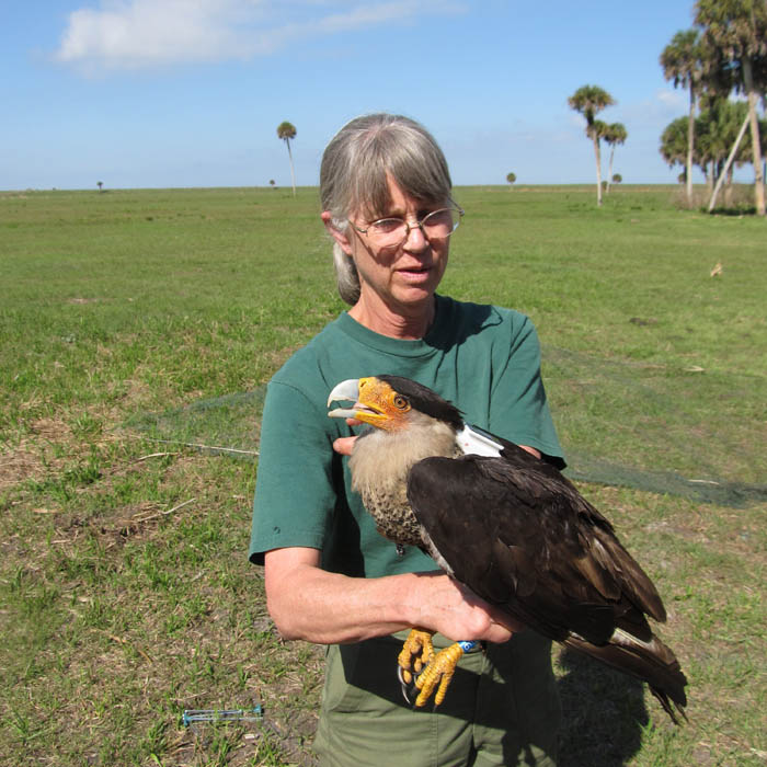 joan with NEBIR caracara