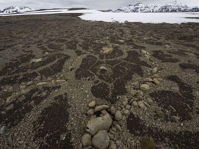 ... patterned ground on our way to Egilssel. We are definitely in the Arctic!