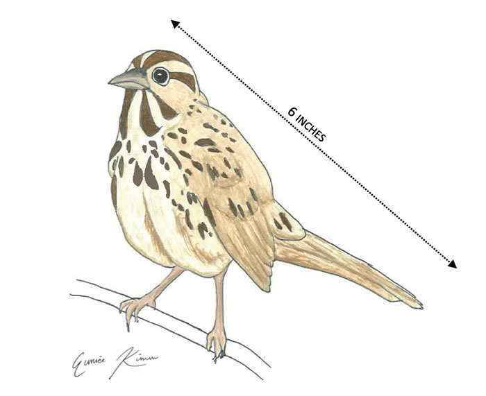March 2015 - Ground Penetrating Radar Drawing of a song sparrow to be featured at one of our interpretative signes. Drawing by Eunice Kim