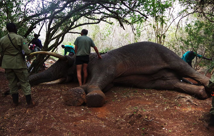 Keza_Elephant_Akagera