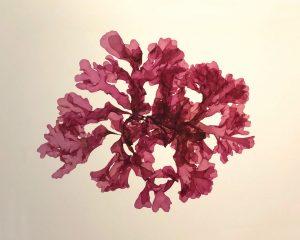 marine flora specimen