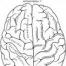 Thumbnail image for brain and behavior